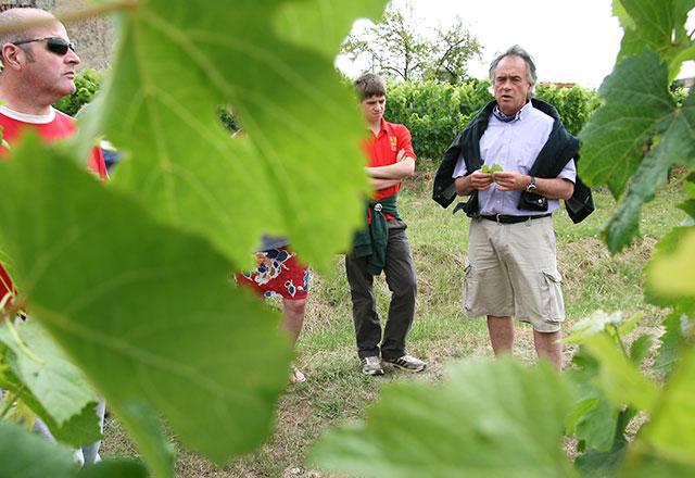 Explore the vineyards of Cotes de Blaye, Bordeaux