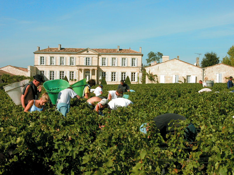 Fall harvest at Branaire Ducru